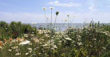 Pictured: Flowers on the beach in Chesapeake Virginia.