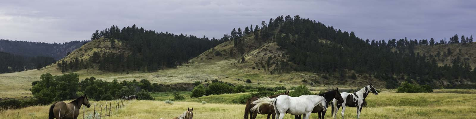 This is an image of a horse farm in Billings Montana. ASTA-USA provides professional translation services in this city.