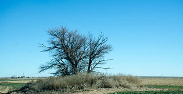 Kansas - Tree in the planes with blue sky and no leaves